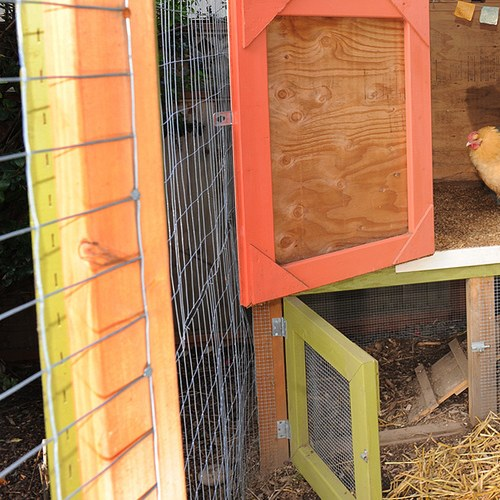 Best Chicken Coop – Reviews & Guide
