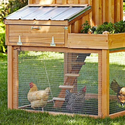 5 Best Chicken Coops - Reviews & Guide
