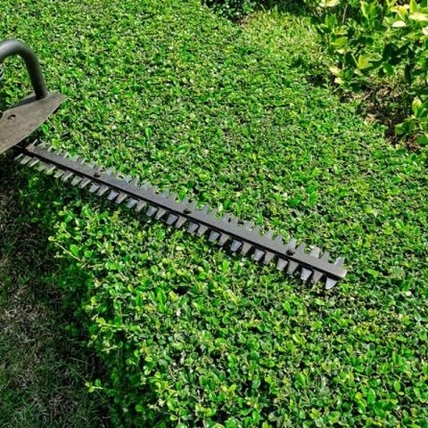 Best Gas Hedge Trimmer – Reviews & Guide