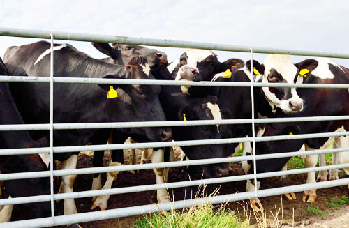 How to Protect Livestock: Fences