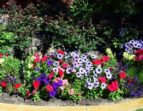 How to prevent weeds in flower beds: plant groundcovers