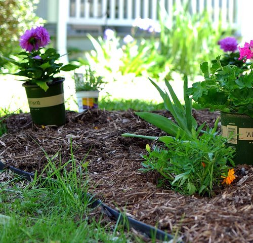 How to prevent weeds in flower beds: mulch generously
