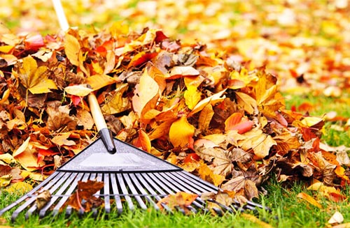 Tools to Get Rid of Leaves: Other Tools
